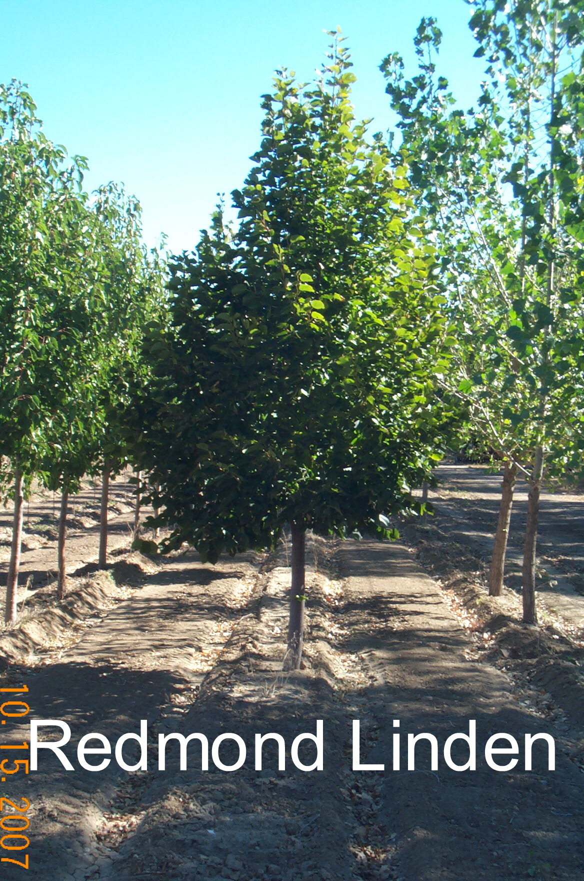 Kenny G\'s Quality Trees - Inventory